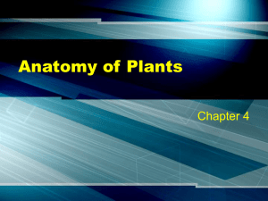 Anatomy of Plants