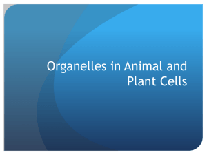 Cell Organelles PPT (Ms. Gardner)