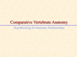 CompVertAnatomy08