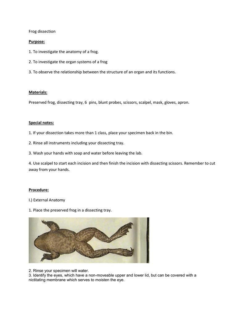External Anatomy Frog Gallery - human body anatomy