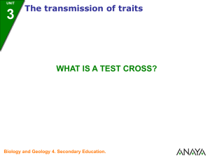 What is a test cross?