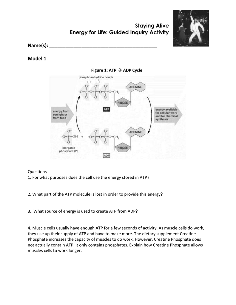 Answer Key Atp Adp Cycle Worksheet Answers - Decorating Ideas