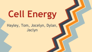 Cell Energy Student Review