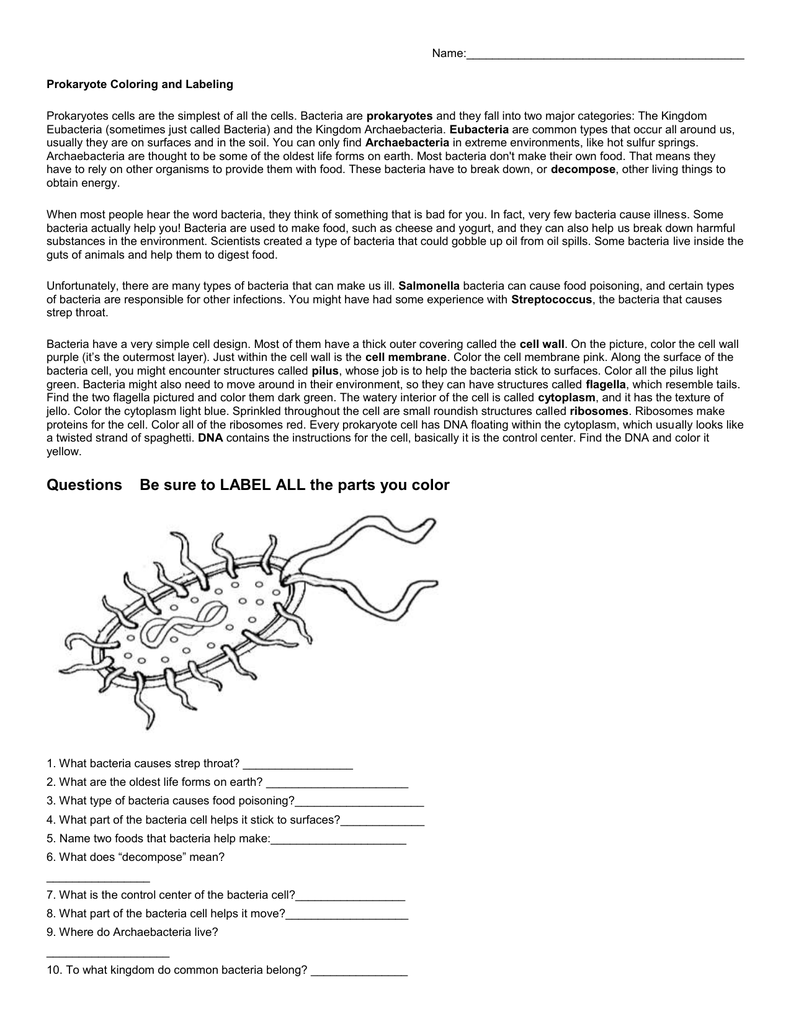 animal cell prokaryote vs eukaryote coloring worksheet worksheet