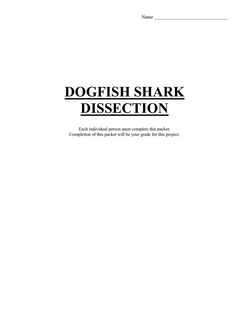 DOGFISH SHARK disection
