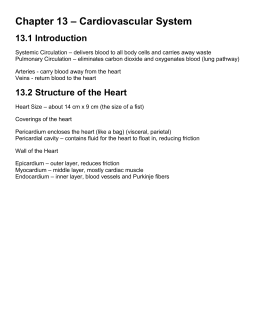 Chapter 13 – Cardiovascular System 13.1 Introduction