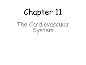 Survey of A&P/Chapter 11 Cardiovascular
