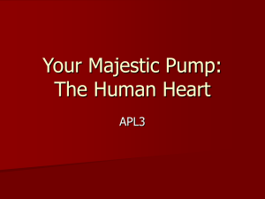 Your Majestic Pump: The Human Heart