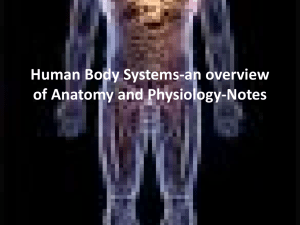 Human Body Systems-an overview of Anatomy and Physiology