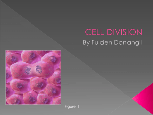 Cell Division fulden