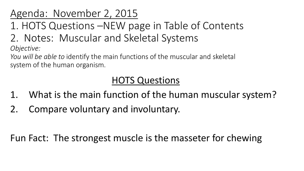 human muscle questions – kefei04, Muscles