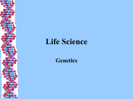 Genetics Vocab and Basics - Montgomery County Schools