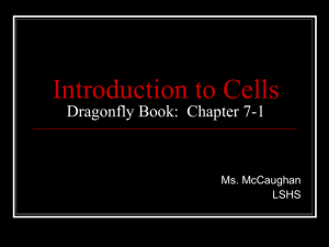 Introduction to Cells Dragonfly Book: Chapter 7-1
