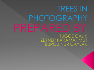 TREES PHOTOGRAPH
