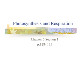 photosynthesis quiz review photosynthesis and respiration