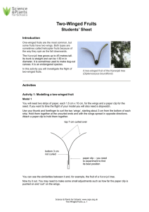 7 Two-winged fruits - student sheet