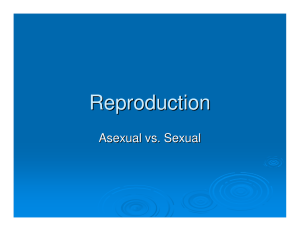 Reproduction Asexual vs. Sexual