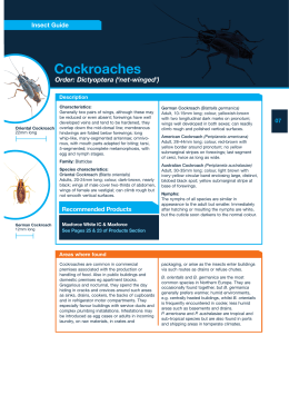 Cockroaches Order: Dictyoptera ('net-winged') Insect Guide
