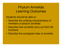 Phylum Annelida Learning Outcomes