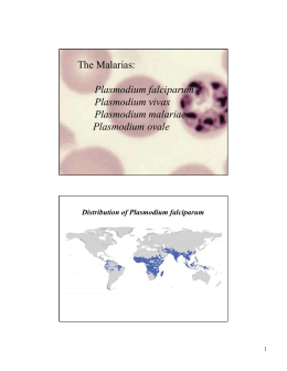 The Malarias: Plasmodium falciparum Plasmodium vivax Plasmodium malariae