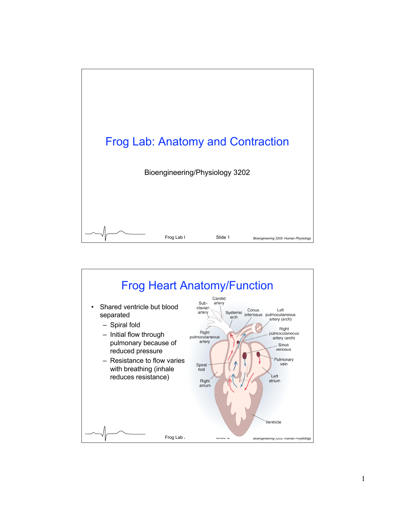 Frog Lab Anatomy And Contraction Frog Heart Anatomyfunction