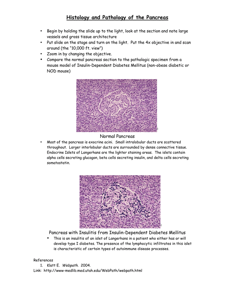 Histology And Pathology Of The Pancreas