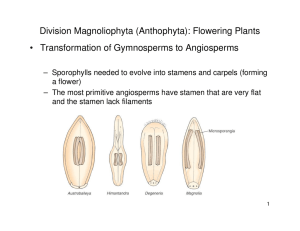Division Magnoliophyta (Anthophyta): Flowering Plants • Transformation of Gymnosperms to Angiosperms