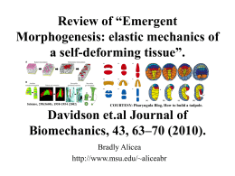 "Review of ""Emergent Morphogenesis: elastic mechanics of a self-deforming tissue""."