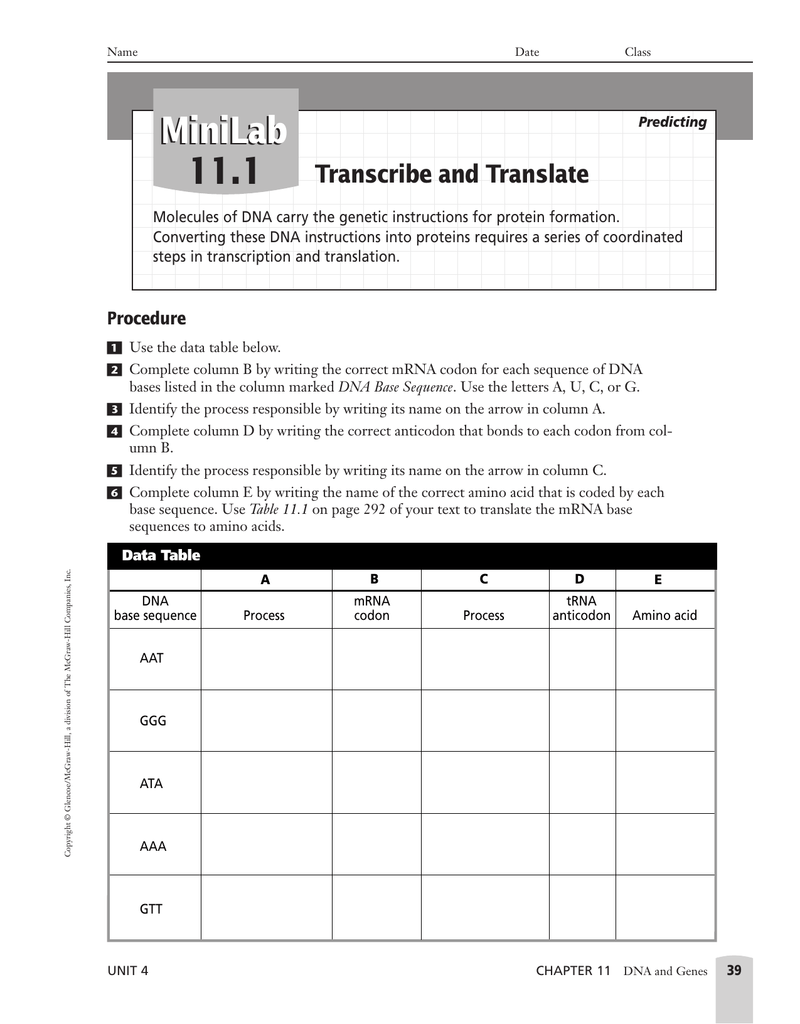 Dna Transcription Worksheet 17 Answers - Nidecmege