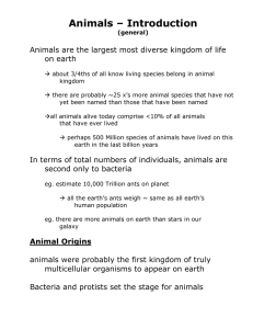Animals – Introduction  on earth