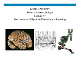MCDB 4777/5777 Molecular Neurobiology Lecture 17 Mechanisms of Synaptic Plasticity and Learning