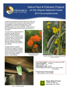 Title text here  Native Plant & Pollinator Projects