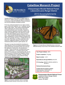 Title text here  Catwillow Monarch Project 2013 Accomplishments