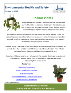 Indoor Plants  Environmental Health and Safety