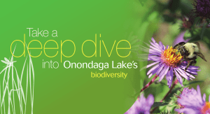 deep dive Take a into Onondaga Lake's