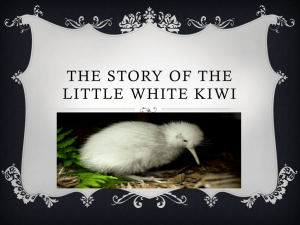 THE STORY OF THE LITTLE WHITE KIWI