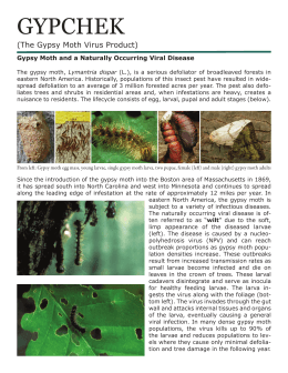GYPCHEK (The Gypsy Moth Virus Product)