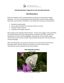Identifying Blues Field Identification: Diagnostic for the Gray Blue Butterfly