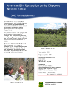American Elm Restoration on the Chippewa Title text here National Forest 2010 Accomplishments