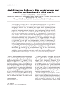 Adult Brünnich's Guillemots balance body condition and investment in chick growth