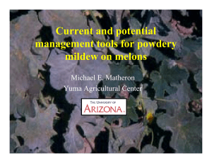 Current and potential management tools for powdery mildew on melons Michael E. Matheron