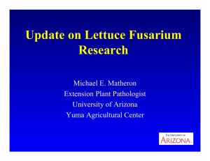 Update on Lettuce Fusarium Research Michael E. Matheron Extension Plant Pathologist
