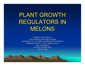 PLANT GROWTH REGULATORS IN MELONS