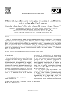 Di¡erential glycosylation and proteolytical processing of LeechCAM in