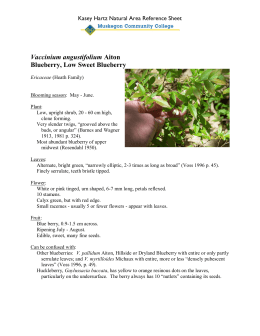 Vaccinium angustifolium Blueberry, Low Sweet Blueberry Kasey Hartz Natural Area Reference Sheet