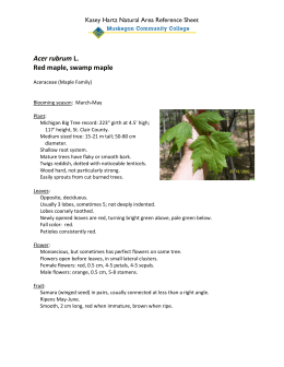 Acer rubrum Red maple, swamp maple Kasey Hartz Natural Area Reference Sheet