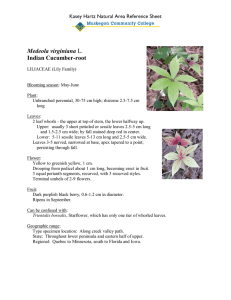 Medeola virginiana Indian Cucumber-root Kasey Hartz Natural Area Reference Sheet