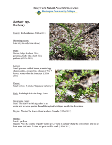 Berberis  spp. Barberry Kasey Hartz Natural Area Reference Sheet