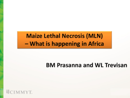 Maize Lethal Necrosis (MLN) – What is happening in Africa