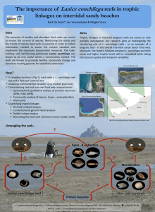 Lanice conchilega The importance of reefs in trophic linkages on intertidal sandy beaches